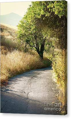Canvas Print featuring the photograph We Will Walk This Path Together by Ellen Cotton
