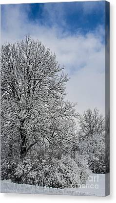 Wealth Of Snow After Nemo Canvas Print