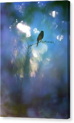 Weather To Fly  Canvas Print by Richard Piper