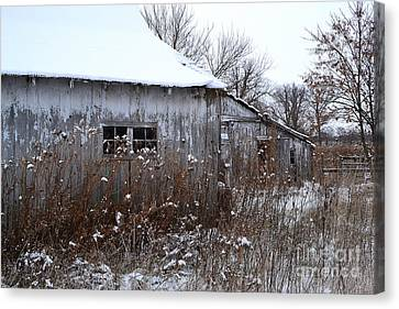 Weathered Barns In Winter Canvas Print
