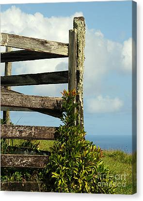 Weathered Fence Canvas Print by Vivian Christopher