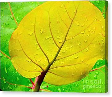 Weathered Canvas Print by Joy Hardee