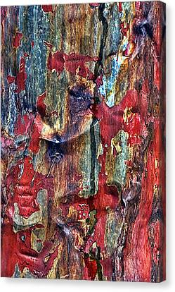 Weathered Canvas Print by Marcia Colelli
