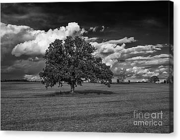 Weathered Oak Canvas Print by Dan Hefle