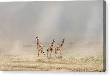 Weathering The Amboseli Dust Devils Canvas Print