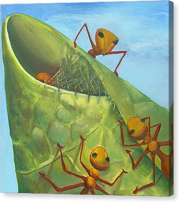 Weaver Ants Canvas Print by Laura Dozor