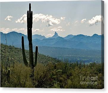 Weaver's Needle Canvas Print by Marilyn Smith