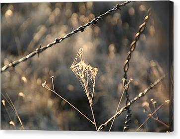 Canvas Print featuring the photograph web by David S Reynolds