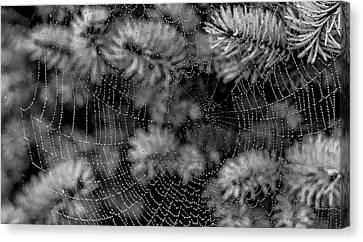Canvas Print featuring the tapestry - textile Web Drops by Dennis Bucklin