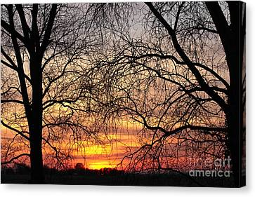 Web Of Branches Canvas Print by David Warrington