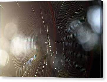 Canvas Print featuring the photograph Web Of Flares by Greg Allore