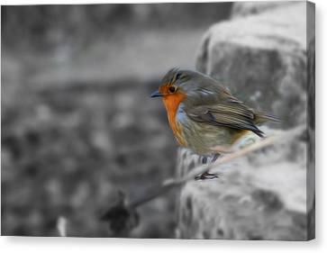 Wee Robin Canvas Print