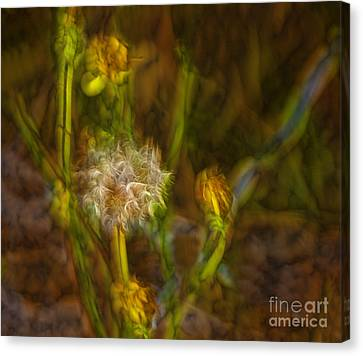 Canvas Print featuring the photograph Weed Art by Shirley Mangini
