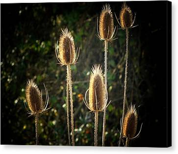 Weeds Canvas Print by Michael L Kimble