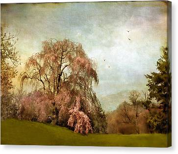 Weeping Cherry Canvas Print by Jessica Jenney