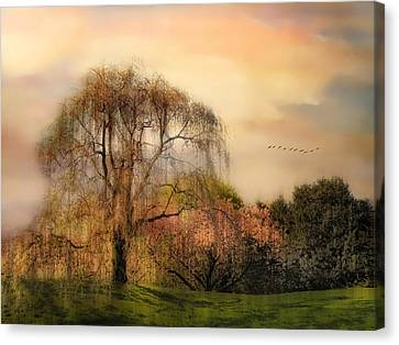 Weeping Cherry Tree Canvas Print by Jessica Jenney