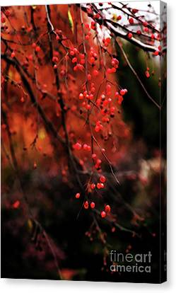 Weeping Canvas Print by Linda Shafer