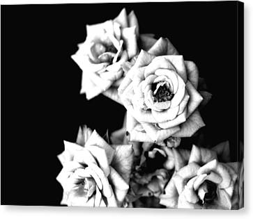 Canvas Print featuring the photograph Weeping Roses by Rachel Mirror