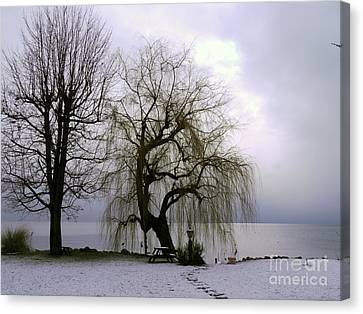 Weeping Willow By Lake Geneva Canvas Print