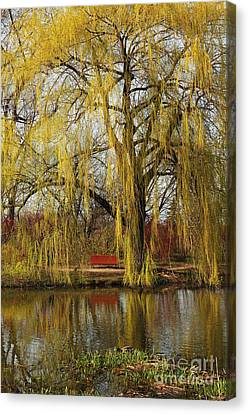 Weeping Willow  Canvas Print by Isabel Poulin