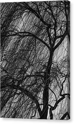 Weeping Willow Canvas Print by Robert Hebert