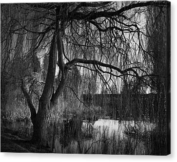 Weeping Willow Tree Canvas Print by Ian Barber