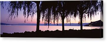 Reflecting Water Canvas Print - Weeping Willows, Lake Geneva, St by Panoramic Images