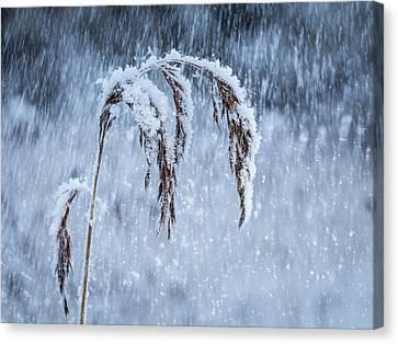 Weight Of Winter Canvas Print by Janne Mankinen