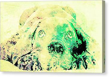 Weimaraner Puppy Canvas Print by Jennifer Choate