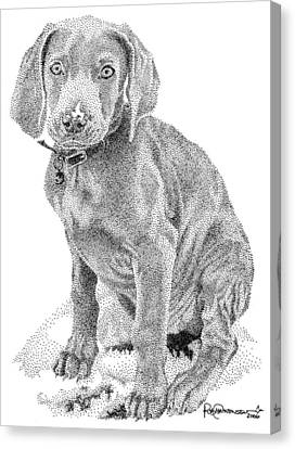 Weimaraner Canvas Print by Rob Christensen