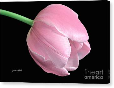Welcome Spring In Pink Canvas Print by Jeannie Rhode