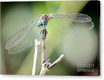 Dragonfly Eyes Canvas Print - Welcome To My World by Carol Groenen