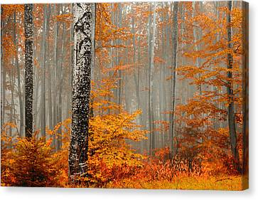 Autumn Landscape Canvas Print - Welcome To Orange Forest by Evgeni Dinev