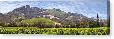 Grape Vines Canvas Print - Welcome To Wine Country by Mike McGlothlen