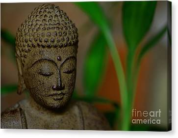 Well Being Canvas Print by Paul Ward