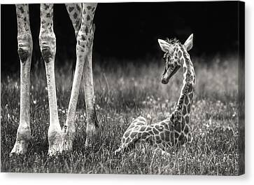 Well Protected Canvas Print by Andreas Feldtkeller