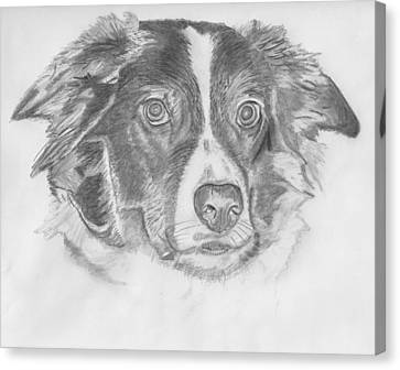 Welsh Border Collie Canvas Print by Catherine Roberts