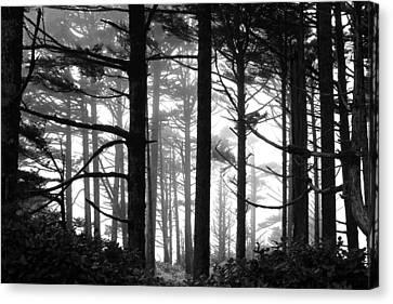 West Coast Trees Canvas Print