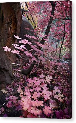 Maple Canvas Print - West Fork Fall Colors by Dave Dilli