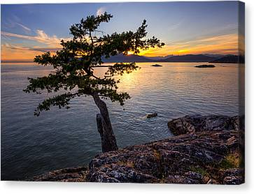 North Vancouver Canvas Print - West From Juniper Point by Alexis Birkill