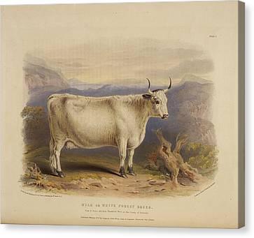 West Highland Breed Canvas Print