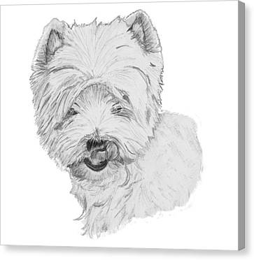West Highland Terrier Drawing Canvas Print by Catherine Roberts