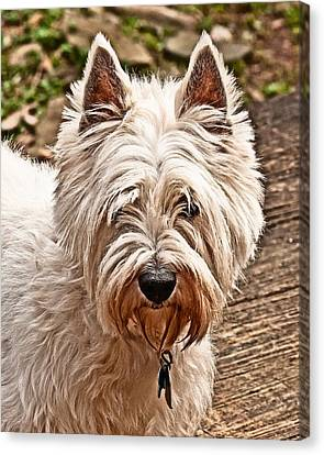 Canvas Print featuring the photograph West Highland White Terrier by Robert L Jackson