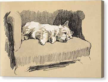 Puppies Canvas Print - West Highlander, 1930 by Cecil Charles Windsor Aldin