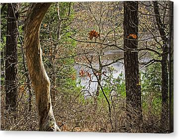 West Pond In The Woods Canvas Print by Frank Winters
