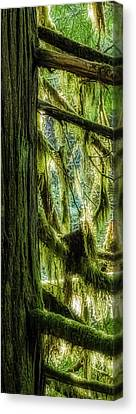 Canvas Print - West Redcedar In The Rainforest by R J Ruppenthal