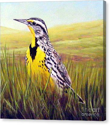 Meadowlark Canvas Print - Western Meadowlark by Tom Chapman