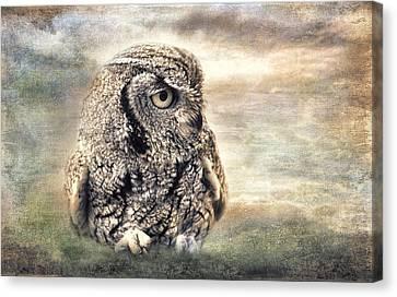 Western Screech Owl Canvas Print by Barbara Manis