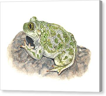 Western Spadefoot Canvas Print by Cindy Hitchcock