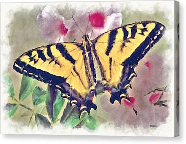 Western Tiger Swallowtail Papilio On Flower Canvas Print by Robert Jensen